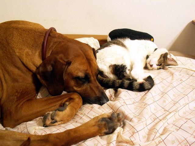 napping pair