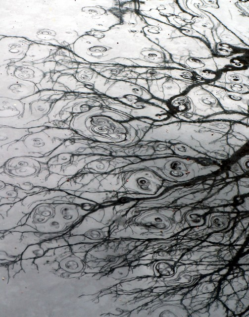 rippled branches