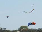 10 Zilker Kite Fest 05.JPG
