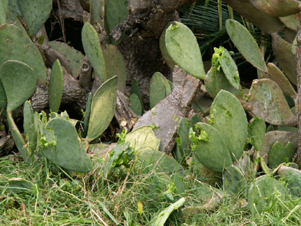 CactusGarden: Eh, I hated this prickly pear anyway.