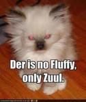 FluffyZuul