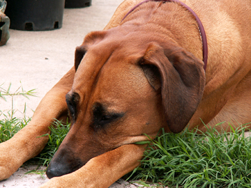 Reese, taking a sun nap. Taken 5/12/05.