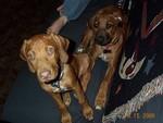 Puppies2_081500.jpg