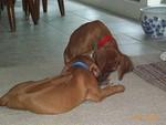 Puppies_071600.jpg