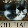 mewingpuprav.jpg