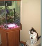 catNfishFEB07.jpg