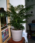 Inside: Potted Palm