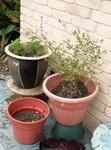 Pot Garden 1