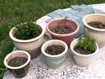 Pot Garden 2
