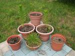 Pot Garden 3