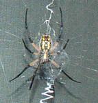 SpiderJuly07.jpg
