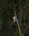 SpiderJuly07-02.jpg