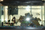 5 gal with adoptees