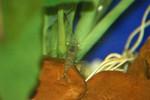 ShrimpGhost082607-01.jpg